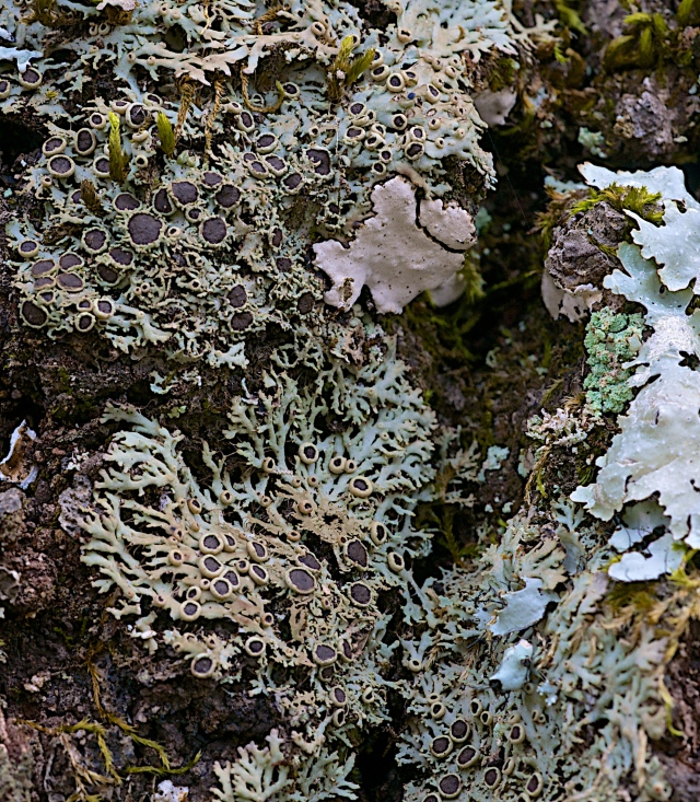 Lichen and Bark Study