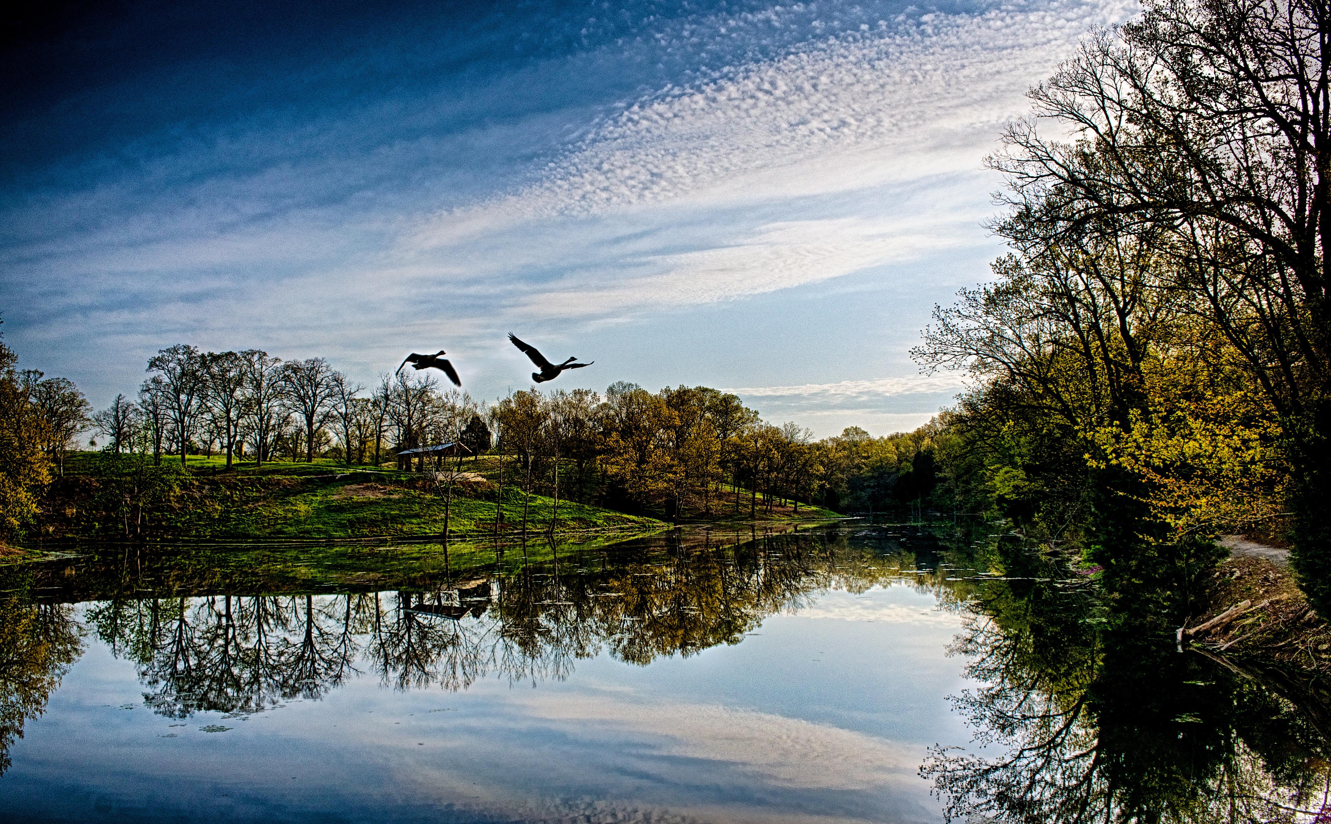 Parkland Morning